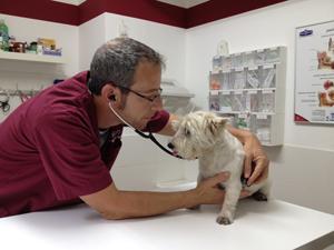 Pet Passport - Полет с собакой - ветеринарная экспертиза