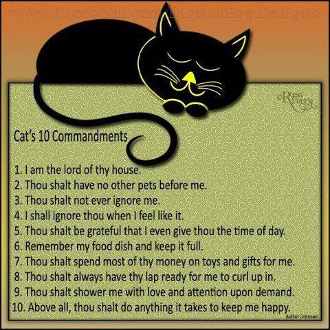 הטסת חתול לחו
