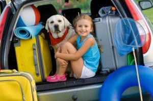Pet Passport - Полет с собакой - рейс