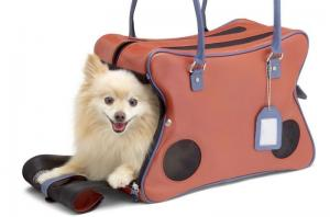 Pet Passport - flying with a dog - Travel equipment for dogs