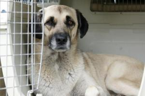 Pet Passport - Полет с собакой-медицинского сопровождения