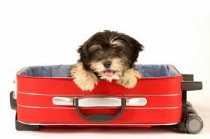 פט פספורט - הטסת כלב ללא בעלים