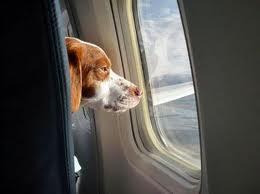 הטסת כלב יכולה להיות הרבה יותר נעימה משחשבתם