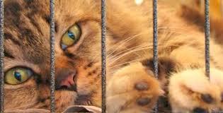 כלוב טיסה לחתול - פט פספורט