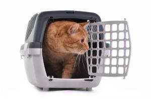 פט פספורט - ציוד- הטסת חתול