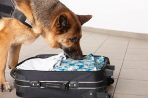 Pet Passport -transporting a dog - Easier travel