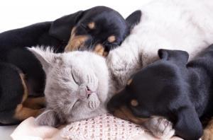 Pet Passport - транспортировки домашних животных - Важно знать