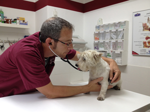 Pet Passport - flying with a dog - Veterinary examination