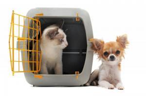 Pet Passport - Полет с собакой, собака разложения